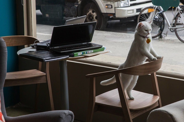 catcafe08