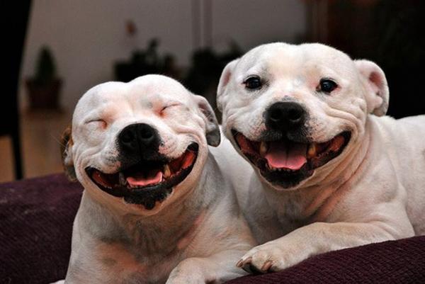 smile (5)