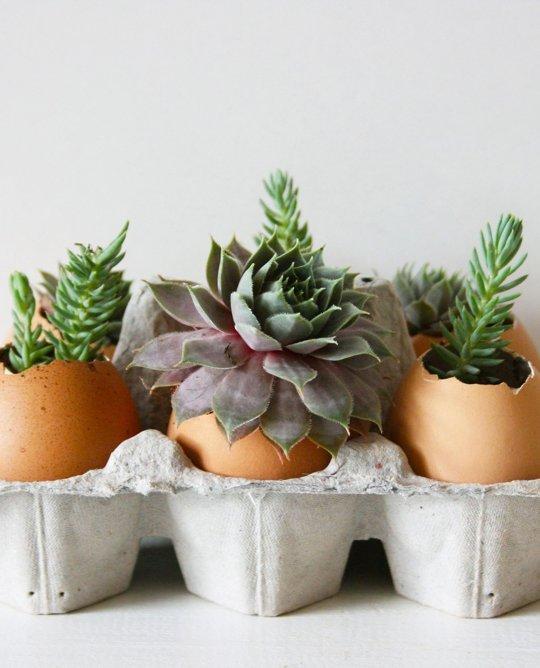 Eggshells11