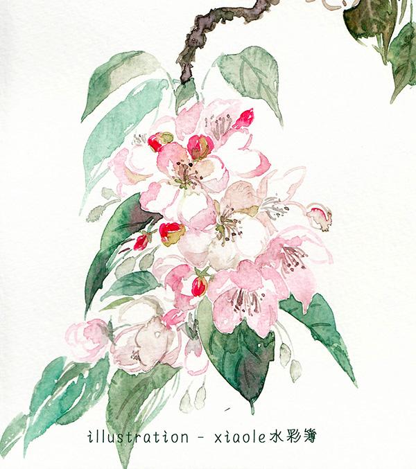 花卉 (2)