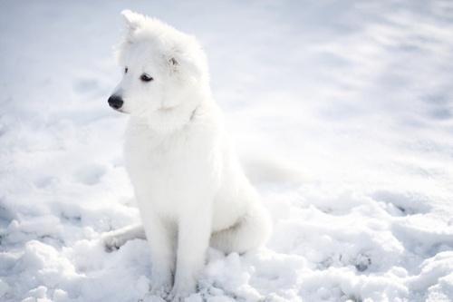 我愿和你雪中漫步,只求一路到白头。