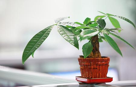 花瓣家居:10种植物帮助你清除室内pm2.5
