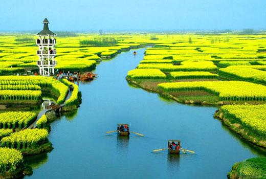 中国最美而宁静的五个油菜花观赏地
