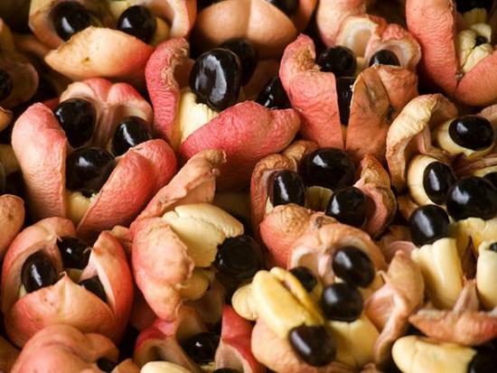 六种罕见水果,你吃过几种?