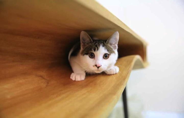 猫桌,带着你的猫一起工作