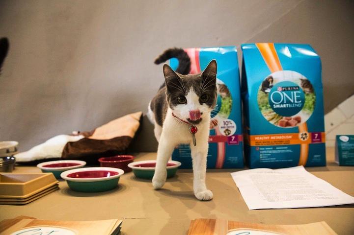 公益咖啡馆,猫咪的家园