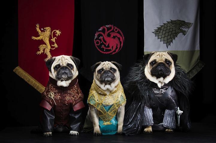 """三只哈巴狗""""主演""""的《权力的游戏》"""