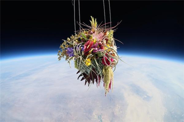 日本艺术家 Azuma Makoto:盆景树与花的太空旅行